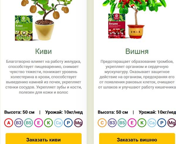 ecodar и фирма фруктовые деревья предлагают урожай до 10 килограмм в неделю