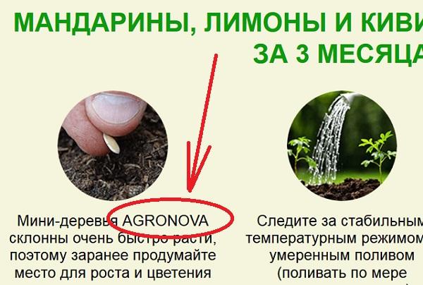 гибридные фруктовые деревья продаются также от имени agronova или агронова
